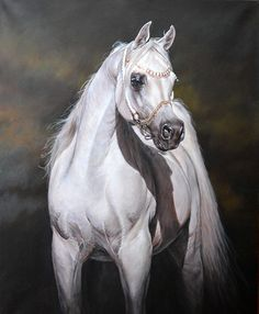 Original Arab Horse Painting by internationally acclaimed UK horse artist Judi Kent Pyrah