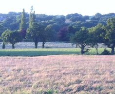 evening light bleaches out colour in field