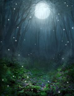 This image captures the concept of midnight dreams and magic in a forest setting.
