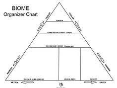 17 Best Ideas About Ecological Pyramid On Pinterest