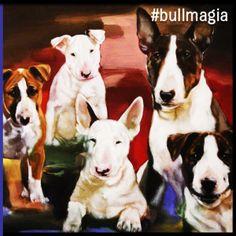 #bullmagia #bullterrier