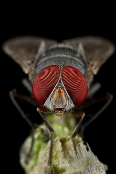 """""""The Fly"""" foto de Danniel Partogi"""