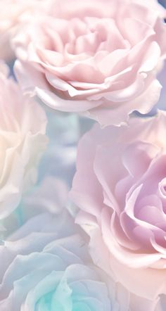Pastel, Floral, Nature, Roses, Blue, Purple, Pink, Picture