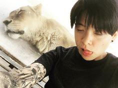 ajol_llama Sleeping with the lions  사자랑 잠꾸러기 ㅋ