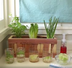 5 Ways To Save Money In The Kitchen sembrarRegrowing vegetable scraps is an easy way to save money and have a constant supply of fresh produce on hand. Here's How To Give Your Vegetable Scraps A New LifeHouse Diy Videos Videos Kitchen New IdeasMake y Container Gardening, Gardening Tips, Kitchen Gardening, Plants In Kitchen, Kitchen Garden Ideas, Gardening Apron, Gardening Gloves, Gardening Supplies, Indoor Garden