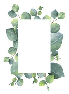 Watercolor green floral card with silver dollar eucalyptus leaves and branches isolated on white background. Illustration about herbal, decoration, green, eucalyptus - 86565807 Flower Backgrounds, Flower Wallpaper, Wallpaper Backgrounds, Iphone Wallpaper, Phone Backgrounds, Watercolor Card, Green Watercolor, Watercolor Leaves, Logo Fleur