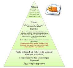 porquinho da india alimentos - Pesquisa do Google
