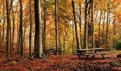 5 Bosques para recibir el #otoño en España