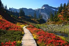 """Bagley Lakes, Chain Lakes — Washington Trails Association This hike is on my """"list"""". Oh The Places You'll Go, Places To Travel, Places To Visit, Evergreen State, Day Hike, Hiking Trails, Vacation Spots, Travel Usa, The Great Outdoors"""