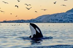 A Whale of a Tale - Stories of Whales #Kids #Events