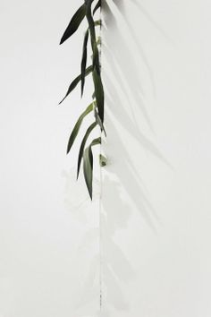 plants Shadow of nature Cactus Plante, Plants Are Friends, No Rain, White Aesthetic, Green Plants, Light And Shadow, Indoor Plants, Flower Power, Planting Flowers