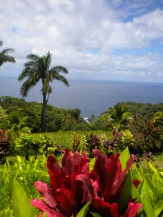 Road to Hana and Beyond - absolutely wonderful!