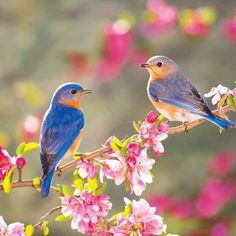 What Does The Bible Say About Spring? What Are The Top Spring Bible Verses?  This List Ranks The Best Bible Verses For The Season Of Spring.