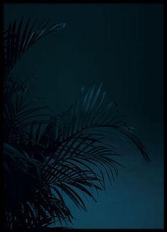Black palm, julisteet ryhmässä Julisteet  / Koot / 50x70 cm @ Desenio AB (8618)
