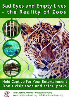 Zoo Animal Posters | Zoo Factsheet (A4) – Quote Code: ZOOFS0206