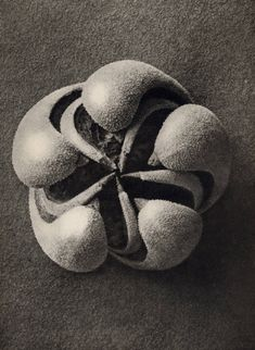 Photographs by Karl Blossfeldt  Title: Loren Eiseley  In this specious present of the real, life struggles to maintain... - but does it float