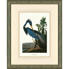 Audubon Prints Birds Bird Framed John James Art Walls Wall Vintage Hanging Photos