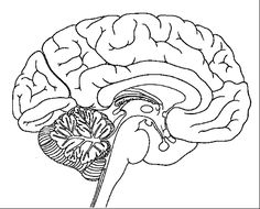 Brain coloring page | School | Pinterest | Brain, Human body and ...