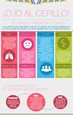 #Infografia Cepillo, peligroso hábitat bacteriano