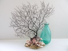 Coral, Driftwood and Black Sea Fan Beach Decor. Perfect .I'll take it