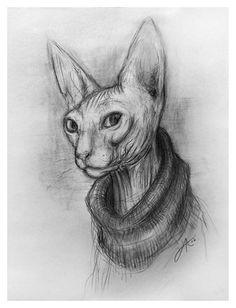 Peterbald cat art print - charcoal drawing - Russian sphynx hairless cat