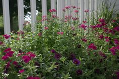 Container Gardening www.smithscountrygardens.com Container Gardening, Gardens, Country, Plants, Rural Area, Outdoor Gardens, Country Music, Plant, Container Garden
