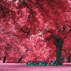 39 Awesome Nature Photos Of Incredible Places, Japanese Maple Tree, Austin, TX Amazing Nature Photos, Beautiful Pictures, Beautiful World, Beautiful Places, Amazing Places, Beautiful Forest, Beautiful Park, Beautiful Morning, Amazing Things