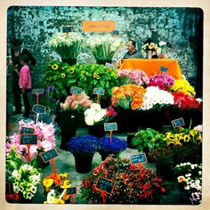 Pretty flowers! Fresh! From Eveleigh Markets, Sydney (from Ally Girrrrl's Inner West Sydney Blog)