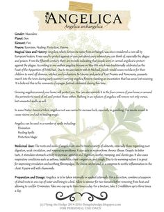 Magical and Medicinal Uses of Angelica. Includes FREE BOS page.