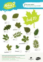 Leaf dial for leaf recognition from the Woodland Trust. Activities from 6 onwards.