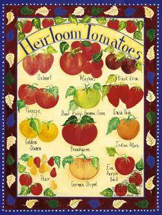 Google Image Result for http://botanicalposters.com/images/Heirloom_Tomatoes.jpg%252082kb.jpg