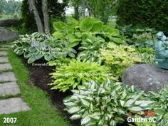 Hosta garden design ideas beautiful garden lots of photos with names of the plants on them . Planting Flowers, Plants, Backyard Landscaping, Lawn And Garden, Garden Shrubs, Outdoor Gardens, Hosta Gardens, Landscape, Beautiful Gardens