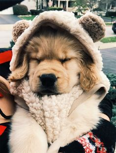 All the things we adore about the Trustworthy Golden Retriever Super Cute Puppies, Cute Little Puppies, Cute Little Animals, Cute Dogs And Puppies, Cute Funny Animals, Baby Dogs, I Love Dogs, Doggies, Cute Animal Pictures