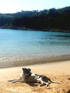 FLIP DA PEDRA DE GUARATIBA! TERRIER BRASILEIRO (FOX PAULISTINHA) Nascimento: 21/07/14. Proprietária: Ana. Filhotes: http://www.canilpguaratiba.com/html/n6letrak_tb.html Facebook: http://pt-br.facebook/canilpedradeguaratiba Instagram: http://instagram.com/canilpguaratiba #canilpedradeguaratiba  #canilpedradeguaratibafoxpaulistinha  #canilpedradeguaratibaterrierbrasileiro  #foxpaulistinha  #terrierbrasileiro  #foxpaulistinhacanilpedradeguaratiba  #terrierbrasileirocanilpedradeguaratiba