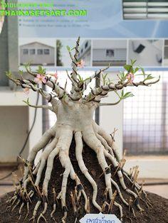 Image from http://www.thaikasetsart.com/wp-content/uploads/2012/08/%E0%B8%8A%E0%B8%A7%E0%B8%99%E0%B8%8A%E0%B8%A12.jpg.