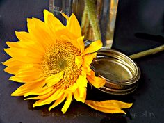 Country Sunflower