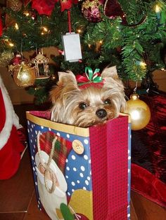 Pup in a gift bag Yorkie Names, Yorkie Puppy, Teacup Yorkie, Tiny Puppies, Cute Puppies, Cute Dogs, Yorshire Terrier, Terrier Puppies, Merry Christmas Dog
