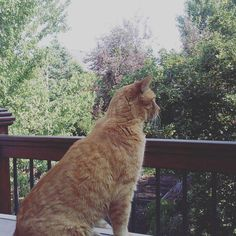 #GingerCat outdoors