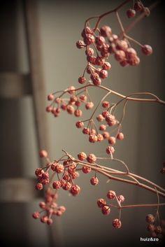 Huiz & Zo Exterior Design, Interior And Exterior, Seasonal Decor, Fall Decorations, Autumn Rain, Simply Beautiful, Frost, Greenery, Living Room Decor