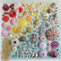 Artist Julie Seabrook Ream has been arranging everyday objects to form brilliant photo sets that mirror the colors of the rainbow. Using delicious foo Rainbow Art, Rainbow Colors, Bric À Brac, Rainbow Project, Things Organized Neatly, Collections Of Objects, Object Photography, Shell Art, Shell Crafts