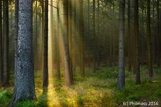 Belgian forest of Saint-Hubert