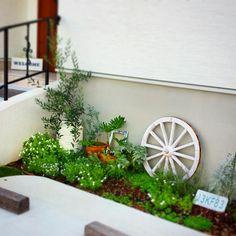 ハーブ/ユーカリ/オリーブ/ガーデン/花/植物…などのインテリア実例 - 2014-08-17 09:59:32 | RoomClip(ルームクリップ) Green Garden, Garden Pots, Broken Pot Garden, Diy And Crafts, Cactus, Home And Garden, Yard, Exterior, Outdoor Structures
