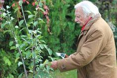 Aki megteheti, használja ki a kertjének adottságait és ültessen minél több gyümölcsfát. Megmutatom, hogyan érdemes hozzálátni.