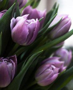 "purple tulips... love them ♥ ✮✮""Feel free to share on Pinterest"" ♥ღ www.myextrashoes.com"