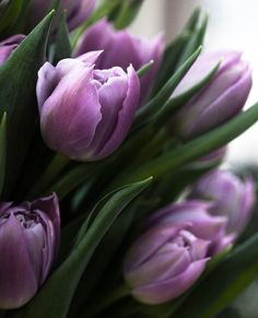 """purple tulips... love them ♥  ❁❁❁Thanks, Pinterest Pinners, for stopping by, viewing, re-pinning, & following my boards.  Have a beautiful day! ❁❁❁ **<>**✮✮""""Feel free to share on Pinterest""""✮✮"""" #fashion  #gifts www.organicgardenandhomes.com"""