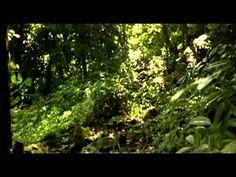 PARADISE 1982 Phoebe Cates FULL MOVIE - YouTube