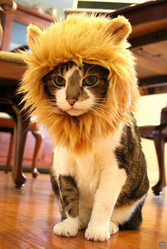Cats in Hats.  this cat looks mad but it's still cute