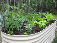 raised bed gardening - Google Search