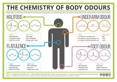 Today's graphic looks at the chemical compounds behind a variety of body odours – all of which we all experience at one point or another. Each is a cocktail of many different chemicals,…