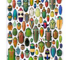 cbe73ed9e6b42ca7da0daf6ba948b152--beetles-insects.jpg (575×500)